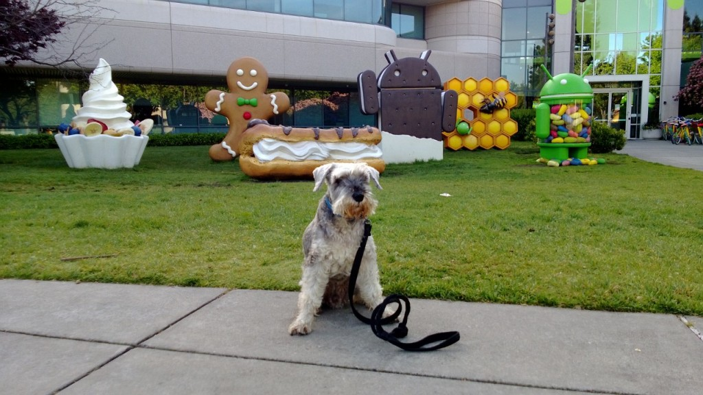android dog
